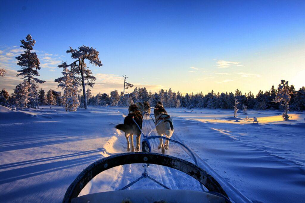 Husky sleigh ride in Ranua