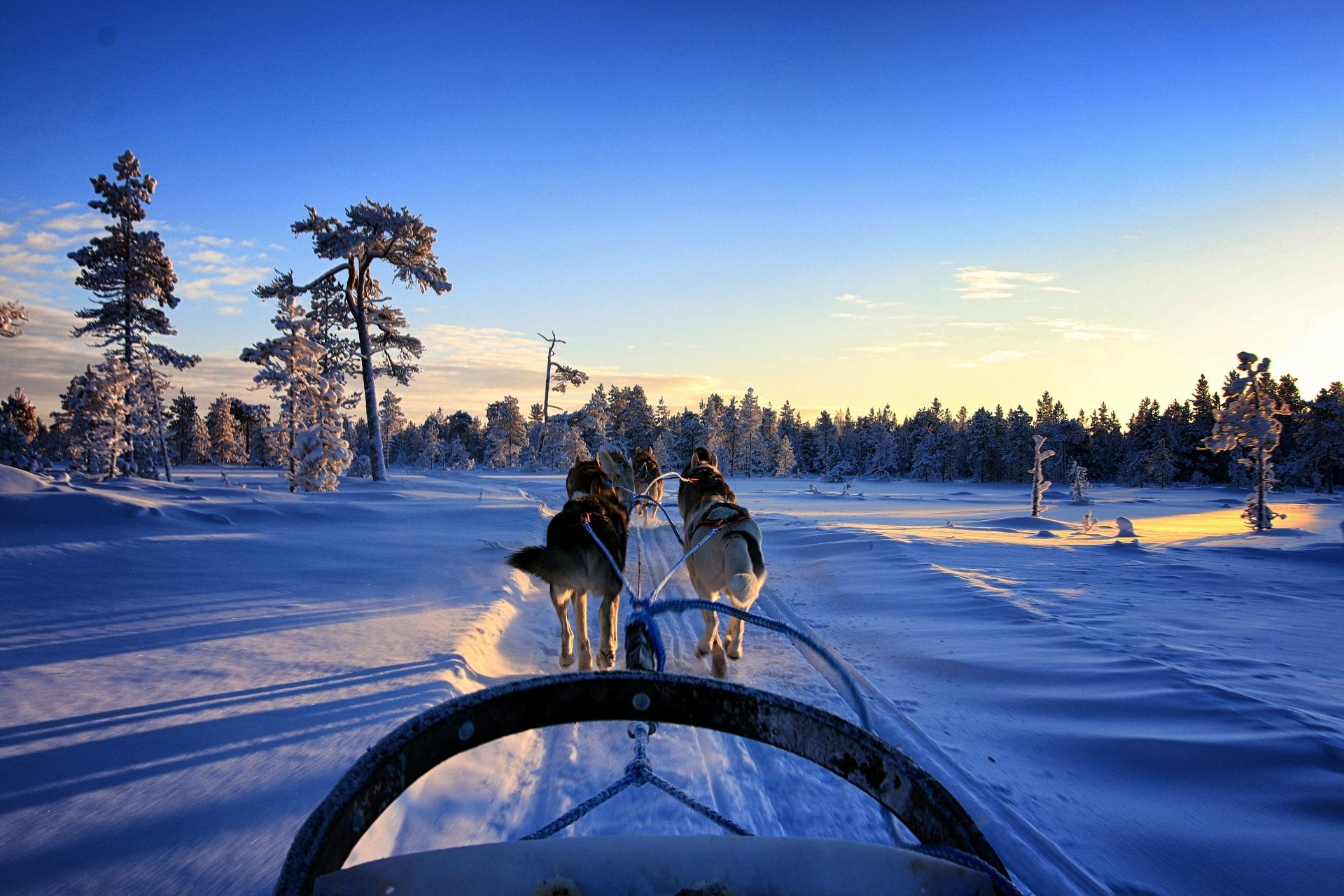 Husky sleigh ride in Ranua