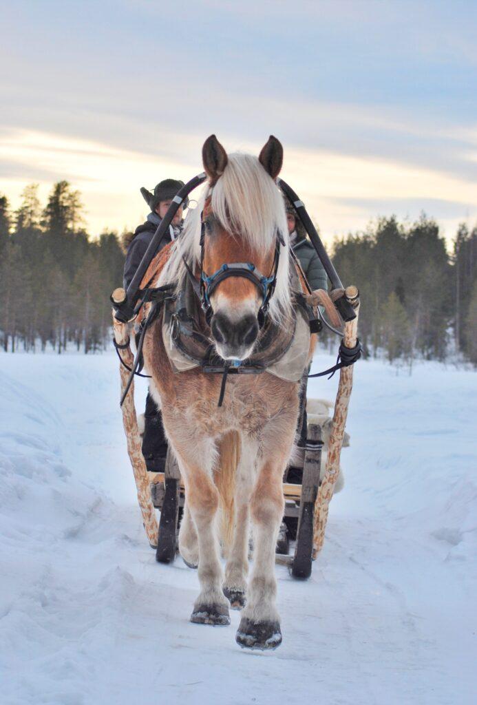 Ranuan Hevospalvelut järjestää mm. rekiajeluja Ranuan ympäristössä