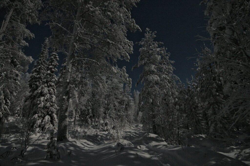 Talvinen metsämaisema Ranualla