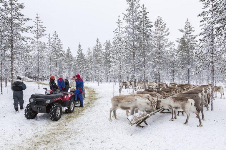 Vierailu Vaaran porotilalla Ranuall talvella