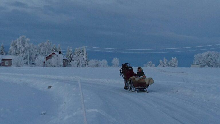 finnish horse sledge ride ranua