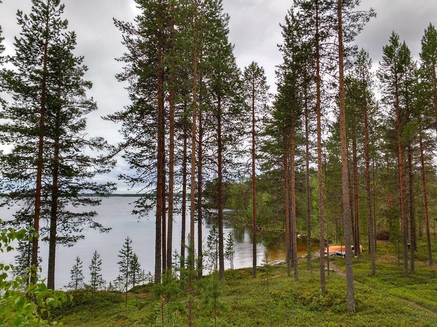 Yksi monista Simojärven kauniista ja koskemattomista järvenpoukamista
