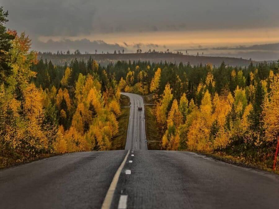 Fall foliage in Finnish Lapland