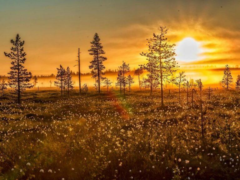 Autumn landscape with fall foliage in Finnish Lapland